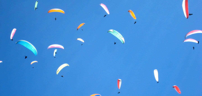 Paraglider Gaggle
